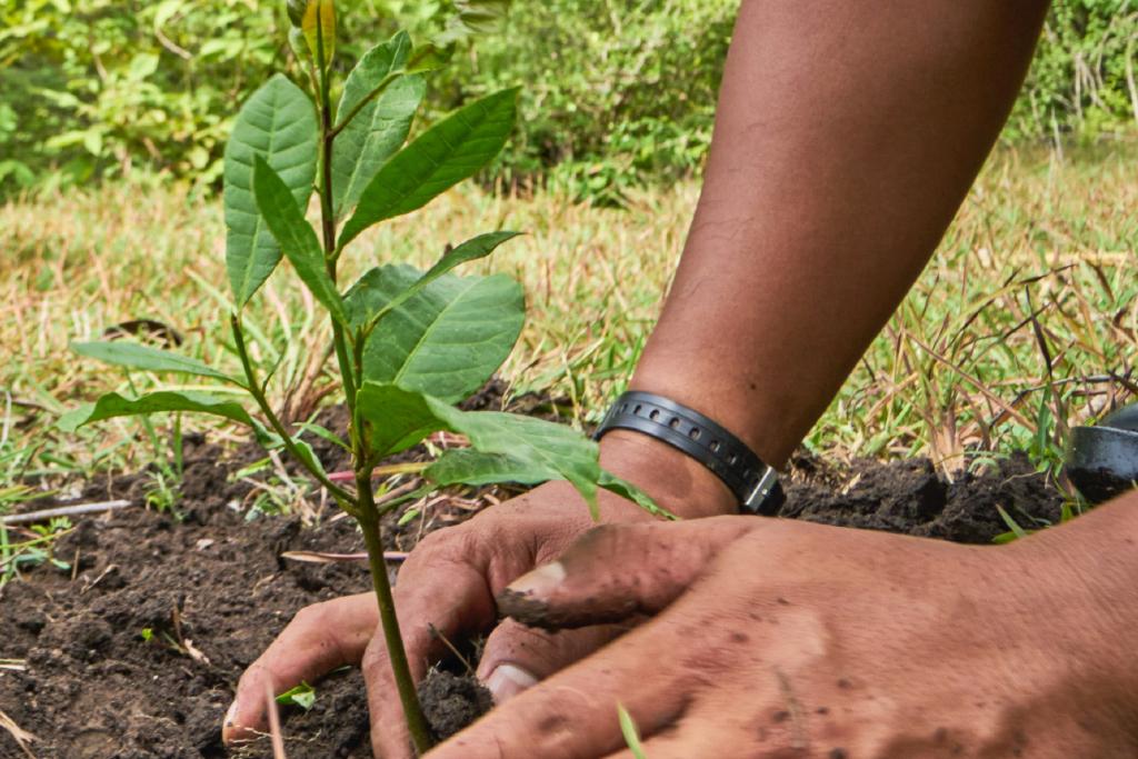 Why we greenify