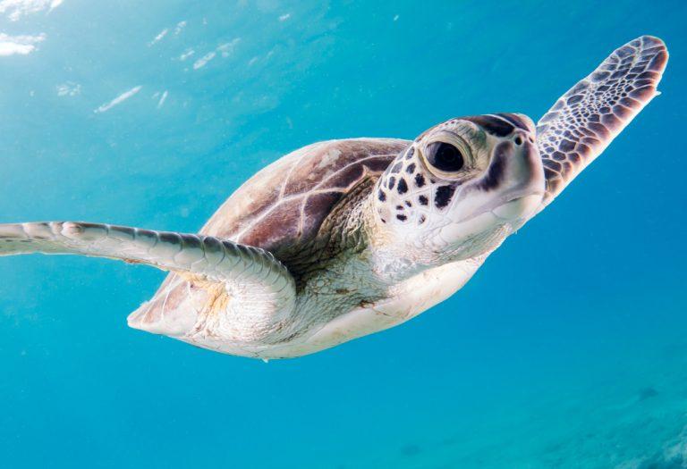 Cleaner oceans | A.D.